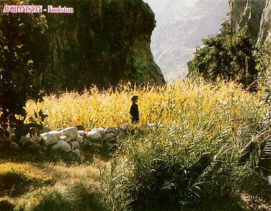 Child in a corn field.jpg