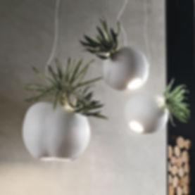 lampada-erbaria.jpg