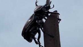 平戸でカブト虫!