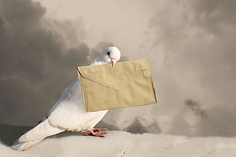 Photo of pigeon with letter on sky backg