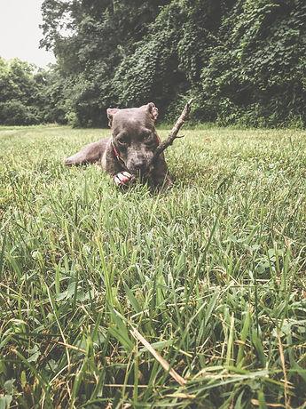 Mac in the grass.jpeg