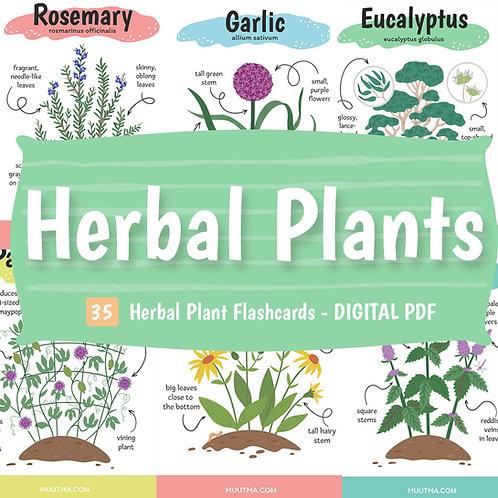 DIGITAL DOWNLOAD PDF - Herbal Plant Flashcards - 35 Printable Cards
