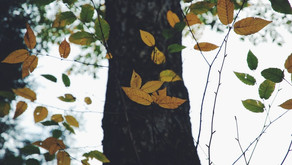 Exploring Seasons to Better Understand Emotions: A Mindfulness Discussion for Kids