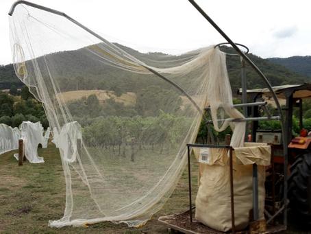 Seven kilometres of nets