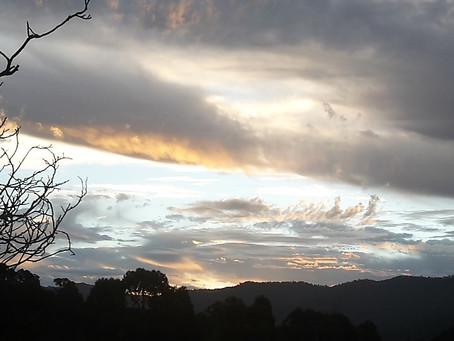 Vineyard skies