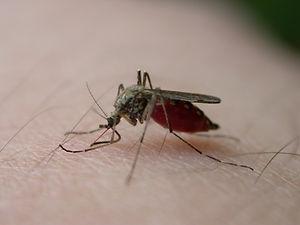 mosquito-bite-3-1410910.jpg