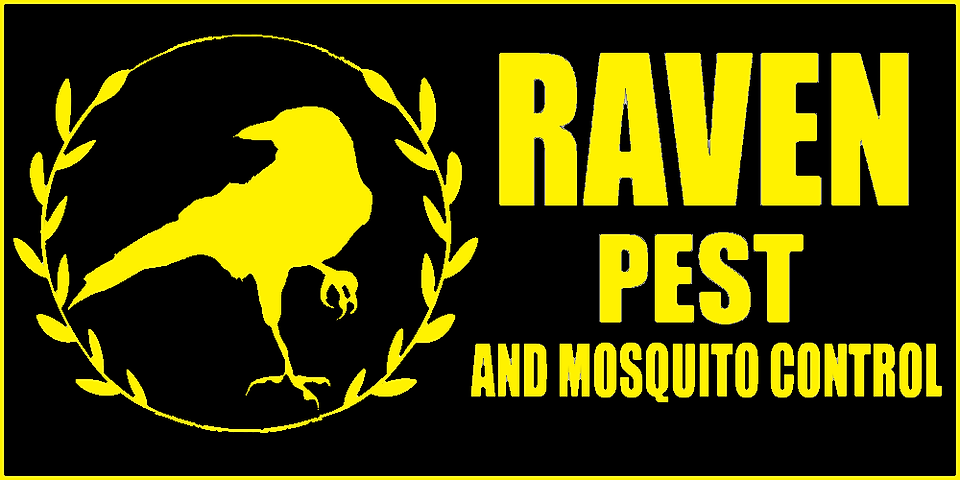 Logo P and M yellow on black.png