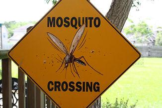 mosquito-crossing-1540616.jpg