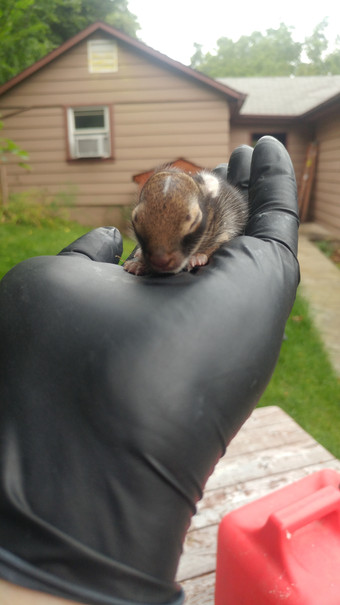 This little guy was safely returned to it's mothers nest.