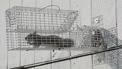 squirrel cage.jpg