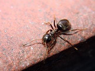 ant-1-1400052.jpg