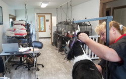 Town and Country Pet Grooming Ear