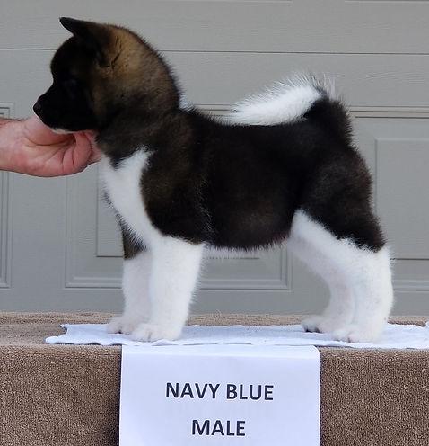 Navy Blue Dazzle.jpg