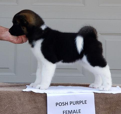 Posh Purple Dazzle.jpg