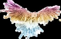 Hawk%20Performance%20Solutions%20logomar