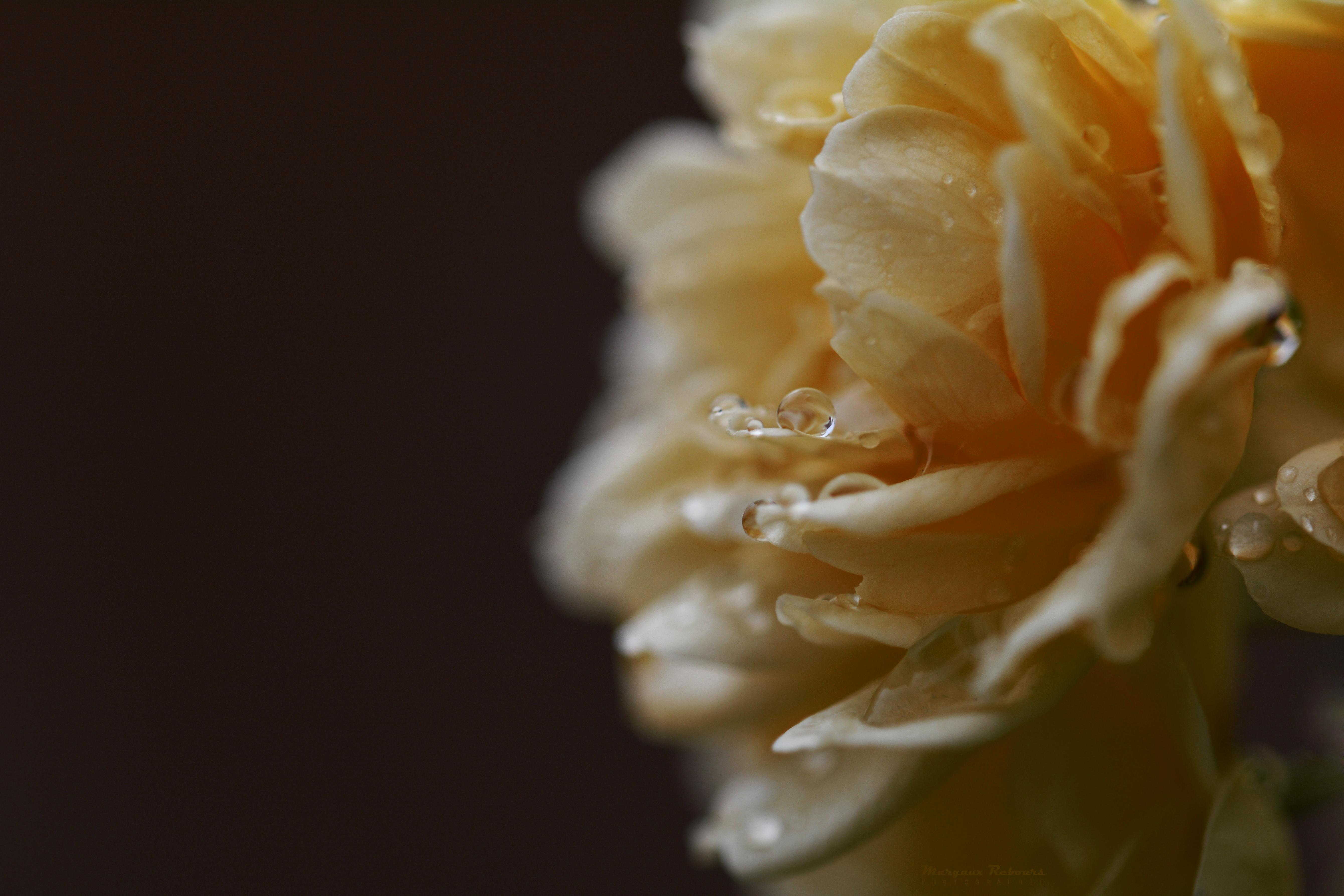 Caresse florale