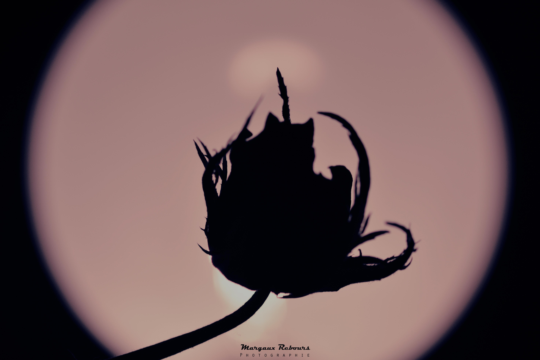 Eclipse poétique