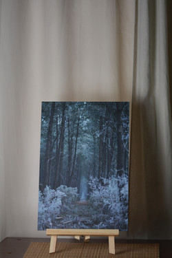 """ Forêt enchantée """