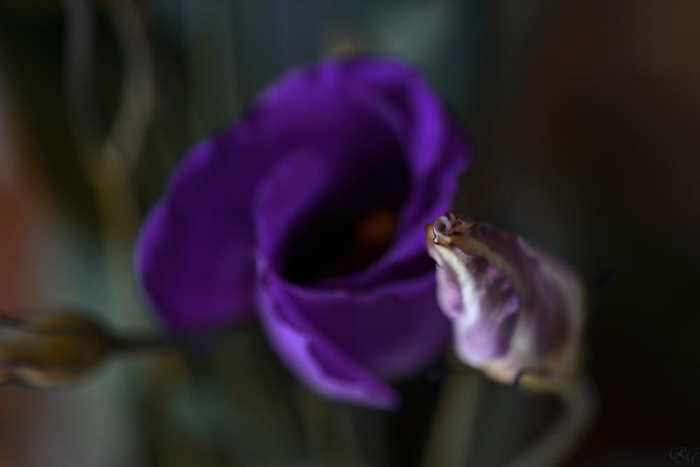 Photographie © Margaux Rebours