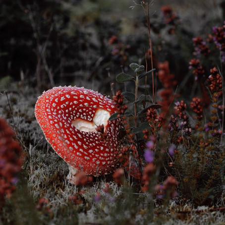 Un peu de champignons ?