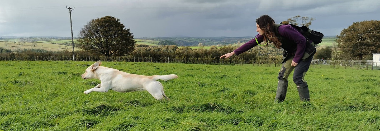 Amy Millward Dog Training - dog training in carmarthen