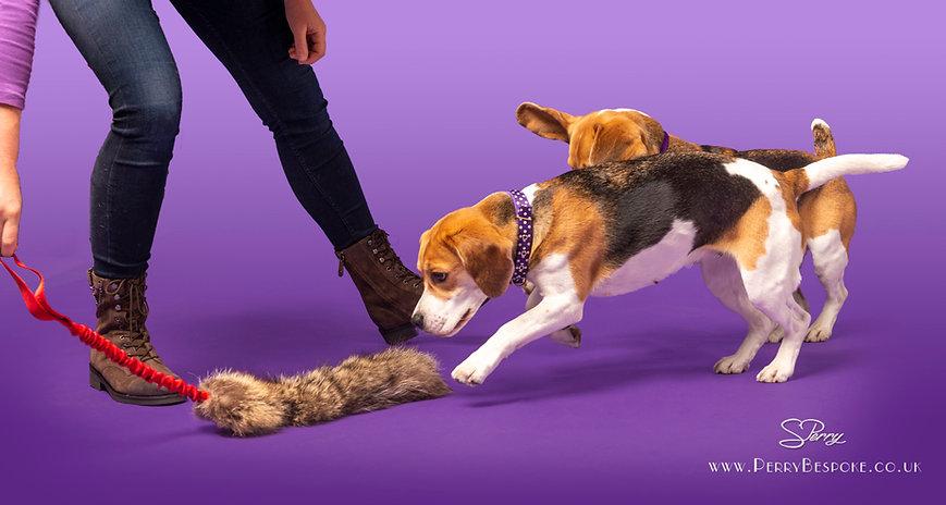 Amy Millward Dog Training (03).jpg
