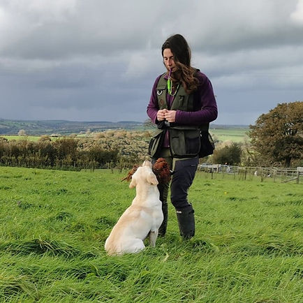 Amy Millward Dog Training - Dog gtraining in Carmarthen