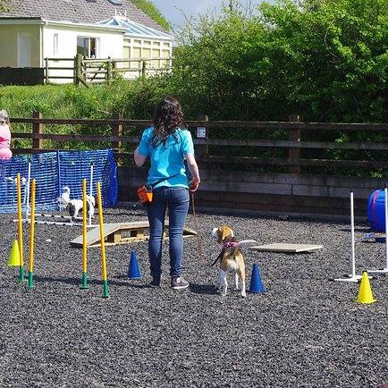 Carmarthen Dog Training, best dog classes in carmarthen, dog trainer, dog training classes, outdoor dog training classes, beagle training,