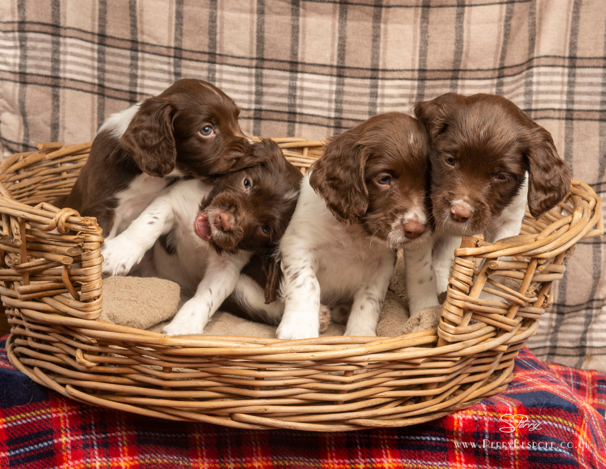 Thursday Puppy Training & Socialisation