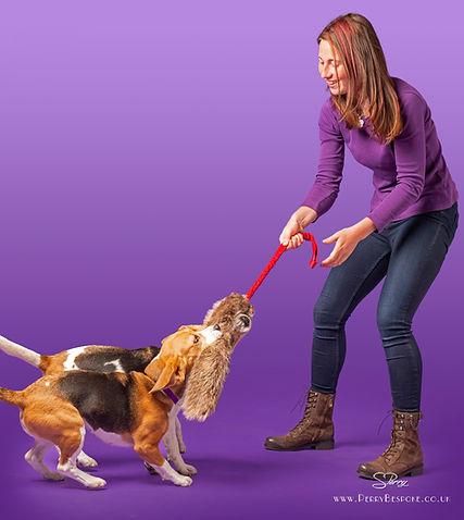 Amy Millward Dog Training fun dog training in carmarthen