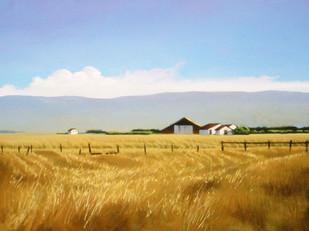 Wind in the Fields