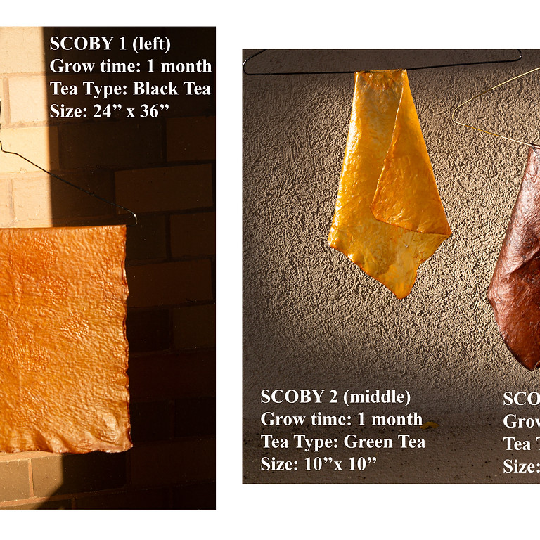 FabScrap Presents: SCOBY- An Introduction to Biomaterials