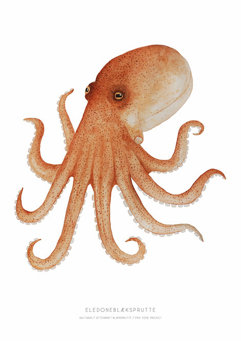 Eledoneblæksprutte (giclee print)
