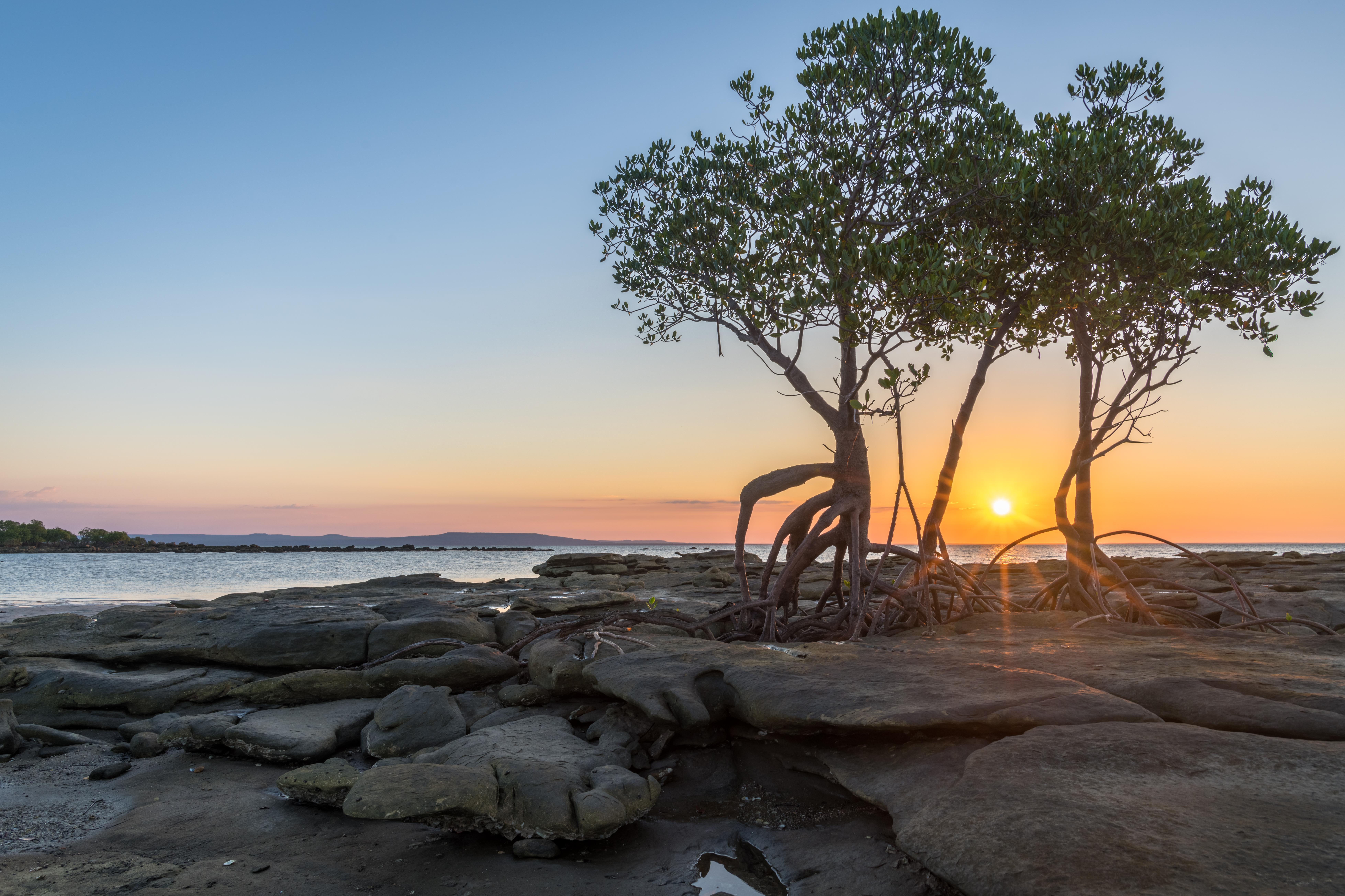 Lone Mangroves