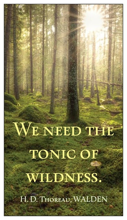 """Magnet: H.D. Thoreau, """"We Need the Tonic of Wildness"""""""