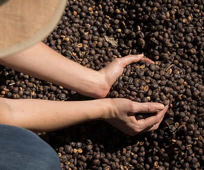 coffee beans web.jpg