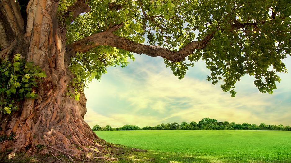TREE Testimonials.png