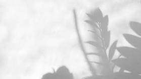 nature shadows (3).png