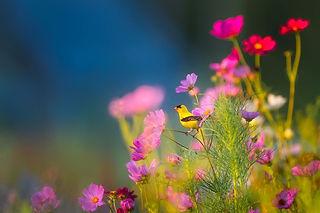flowers-1835619_1280.jpg