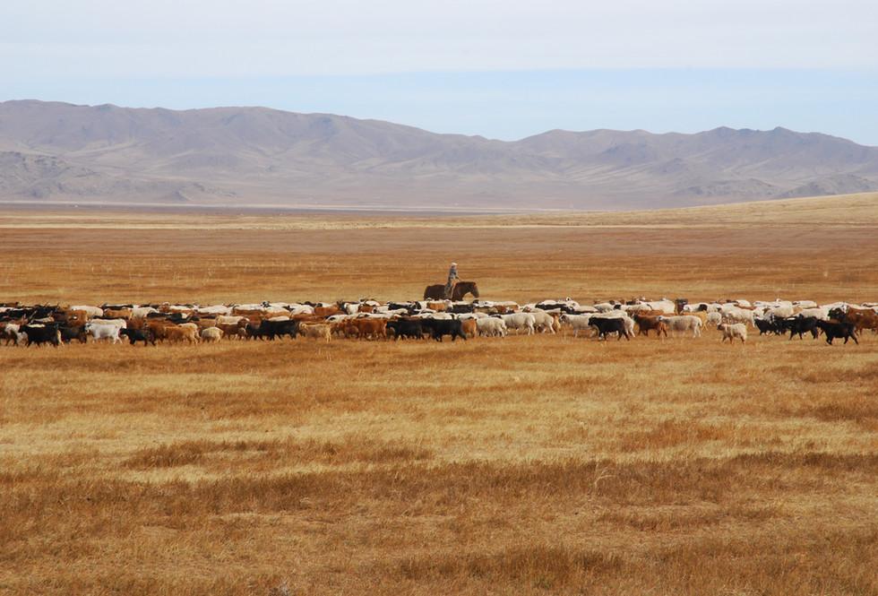 Mongololian herder