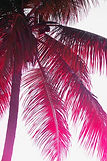 beach, photography, vacation, palm tree, pink, beach