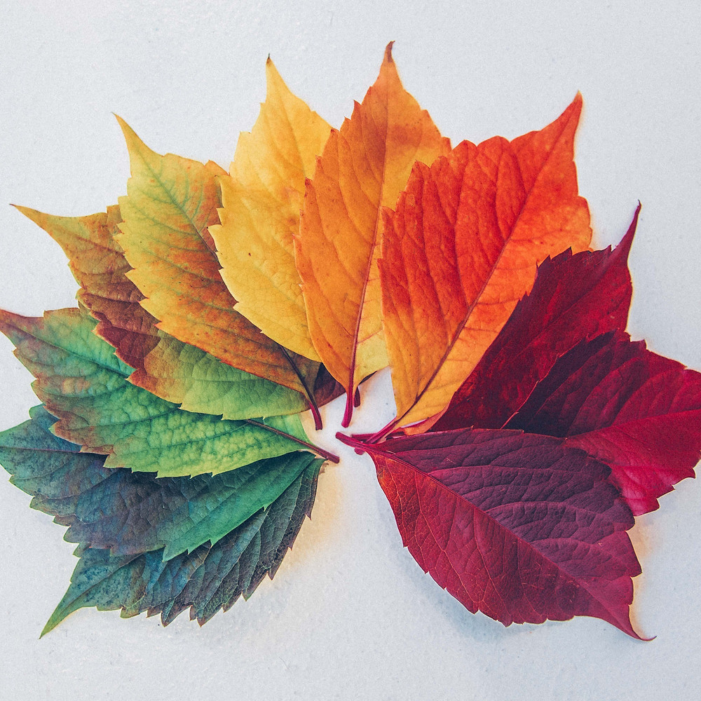 array of leaves turned colors by the seasons