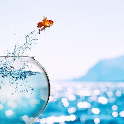 Goldfish%20leaps%20out%20of%20the%20aqua