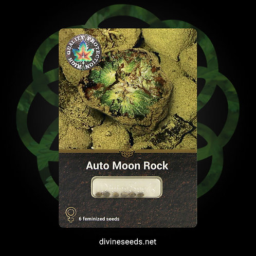 Auto Moon Rock (3 & 6 Packs)