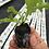 Thumbnail: Jiffy 7C pellets