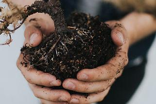 hands_holding_dirt.jpg