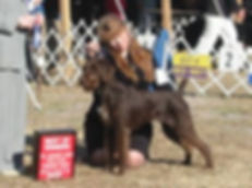 "CH. Afterhours Jorga Bell ""Ruby"" Her parents are Afterhours Ace's High JH & Afterhours Mississippi Mudd"