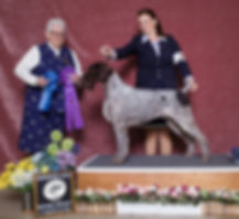 pippin winners dog.jpg