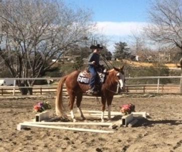 Horse Show Trail Course