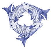 Fish from Trinity blue.jpg